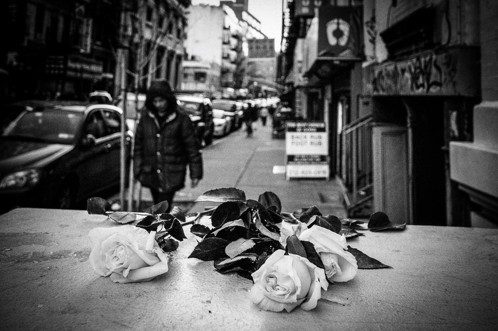 flowers_elizabeth_street(C)2013JASONWELCH