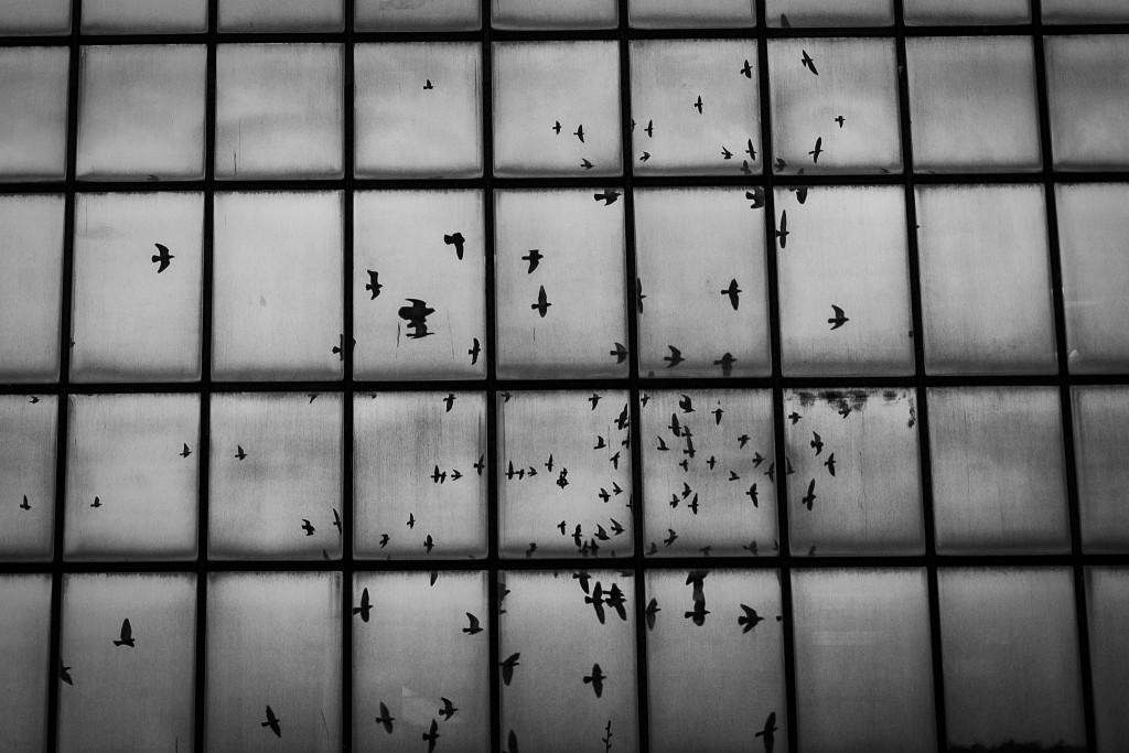 birds(c)2015JASONWELCH